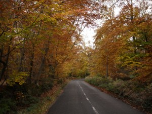 The roads through Burnham Beeches were full of Autumn colour.